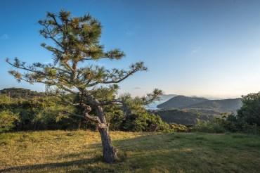 naoshima oval 11.jpg