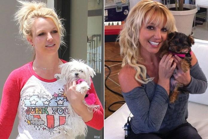 Britney Spears làm những gì mà tiêu hết 250 tỷ đồng chỉ trong 1 năm? - Ảnh 4.