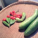 nedoco farmで野菜を作るということ