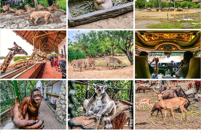 泰國曼谷必去   賽佛瑞野生動物園 Safari World-餵食長頸鹿好High啊!訂票/交通/餐食一日遊攻略。