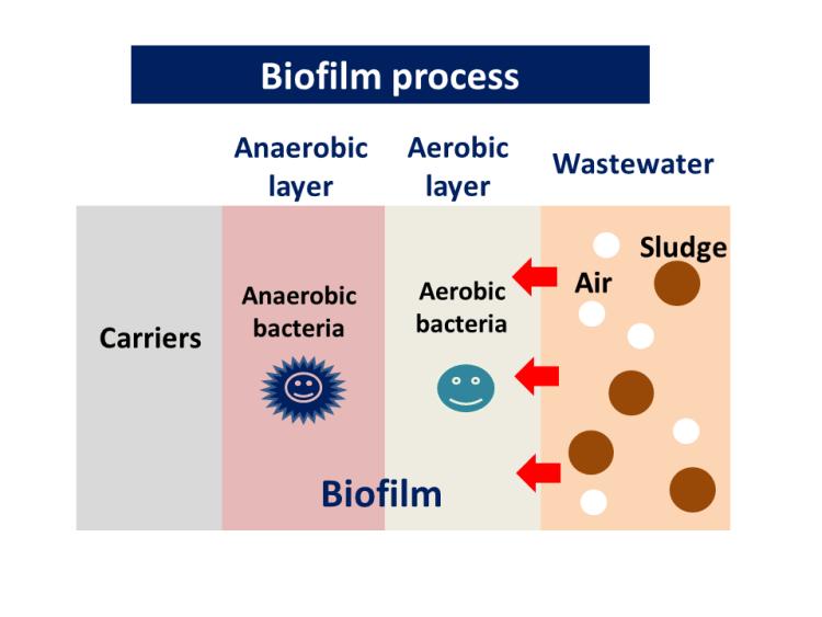 biofilm process waste water treatment sludge dryer kenki dryer 1/4/2020