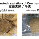 cow manure drying waste drying recycling drying 31/05/2020
