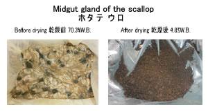 ホタテウロ乾燥 廃棄物リサイクル乾燥 kenki dryer 2018.4.16