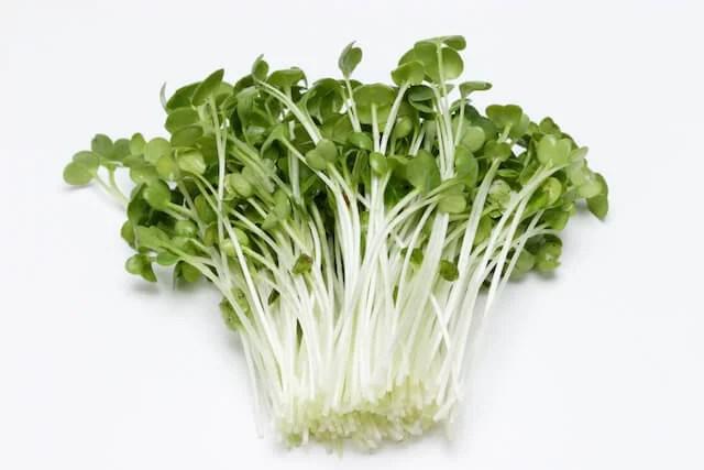 スプラウトの代表!栄養がギュッと詰まったかいわれ大根の5つの効能!
