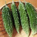 苦味がおいしい!夏野菜ゴーヤの上手な5つの手順や育て方
