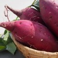 秋の味覚!ほくほくのさつまいもは簡単に栽培できる?!5つのポイント