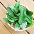 モロヘイヤは栄養ぎっしり!王様の野菜に含まれる6つの栄養素