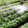 家族の健康を守ろう!無理なく残留農薬摂取を防ぐ5つの方法