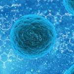 cell - 究極の美容は細胞から?細胞をケアすべき3つの理由とは?