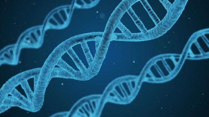 DNAと遺伝子の違い