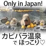 【画像】カピバラはなぜ温泉に入るの?可愛いけど湯冷めしない?海外での反応も