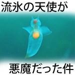 【動画】クリオネ(ハダカカメガイ)の新種発見!種類・生態・食べる捕食シーンが怖い…