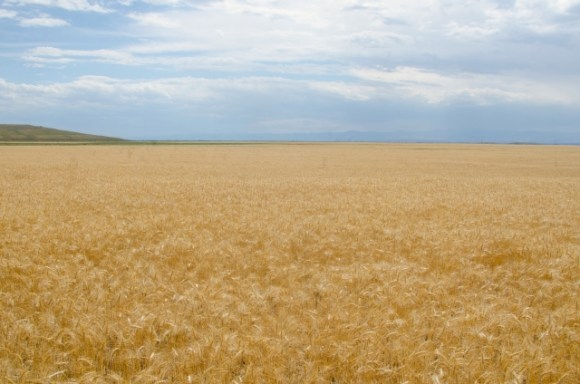 アメリカの農家は世界一の生産力!そこに潜む農業問題とは?
