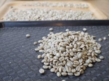 コーヒー生豆を発芽加工し発芽コーヒーが作られる!特徴は?