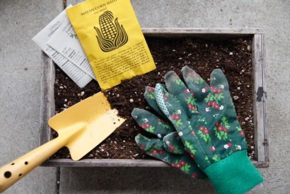 家庭菜園に挑戦!土づくりや肥料に選ぶ石灰について知ろう