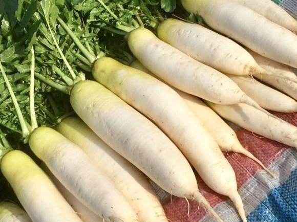 家庭菜園などで大量に大根を収穫したときの保存方法