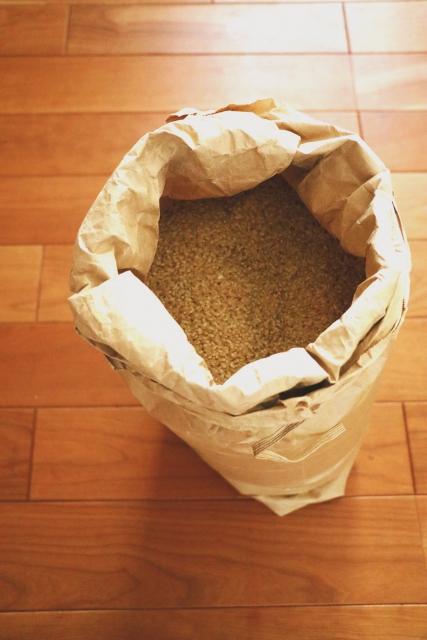 玄米を虫から予防するためには?ワサビや唐辛子よりも効果的