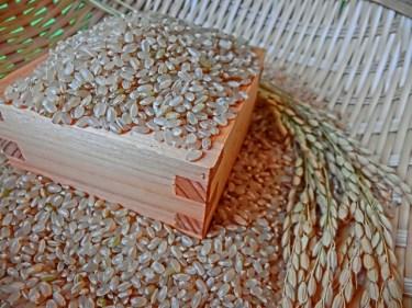 玄米のタンパク質の特徴や含有量と健康面との関係性とは?