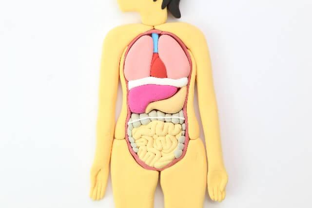 皮膚のかゆみと内臓の関係とは?