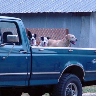 web-80103-boys-in-truck