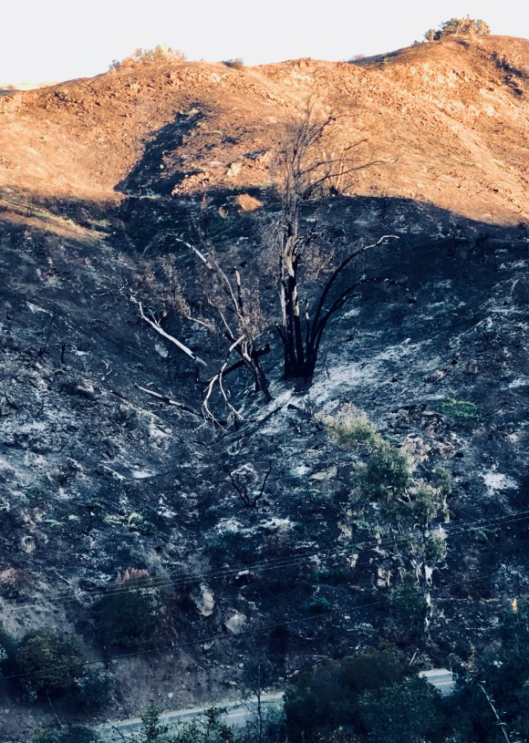 Burnt Tree