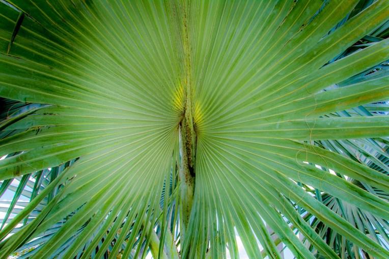 Palm Burst-D71_8754