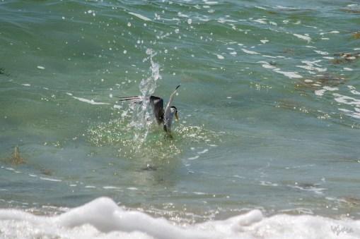 A Catch By Tern III