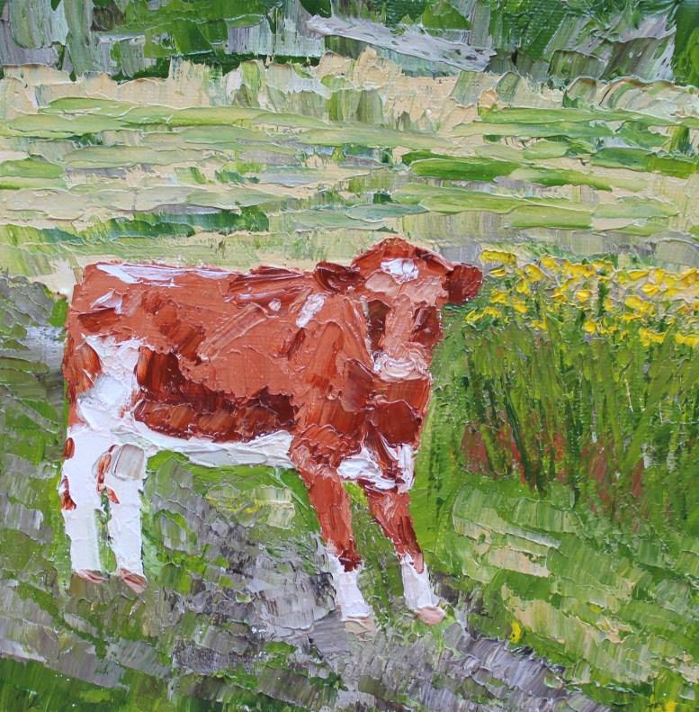 Kerry Cow, Ireland