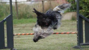 Scahpendoes springer agility