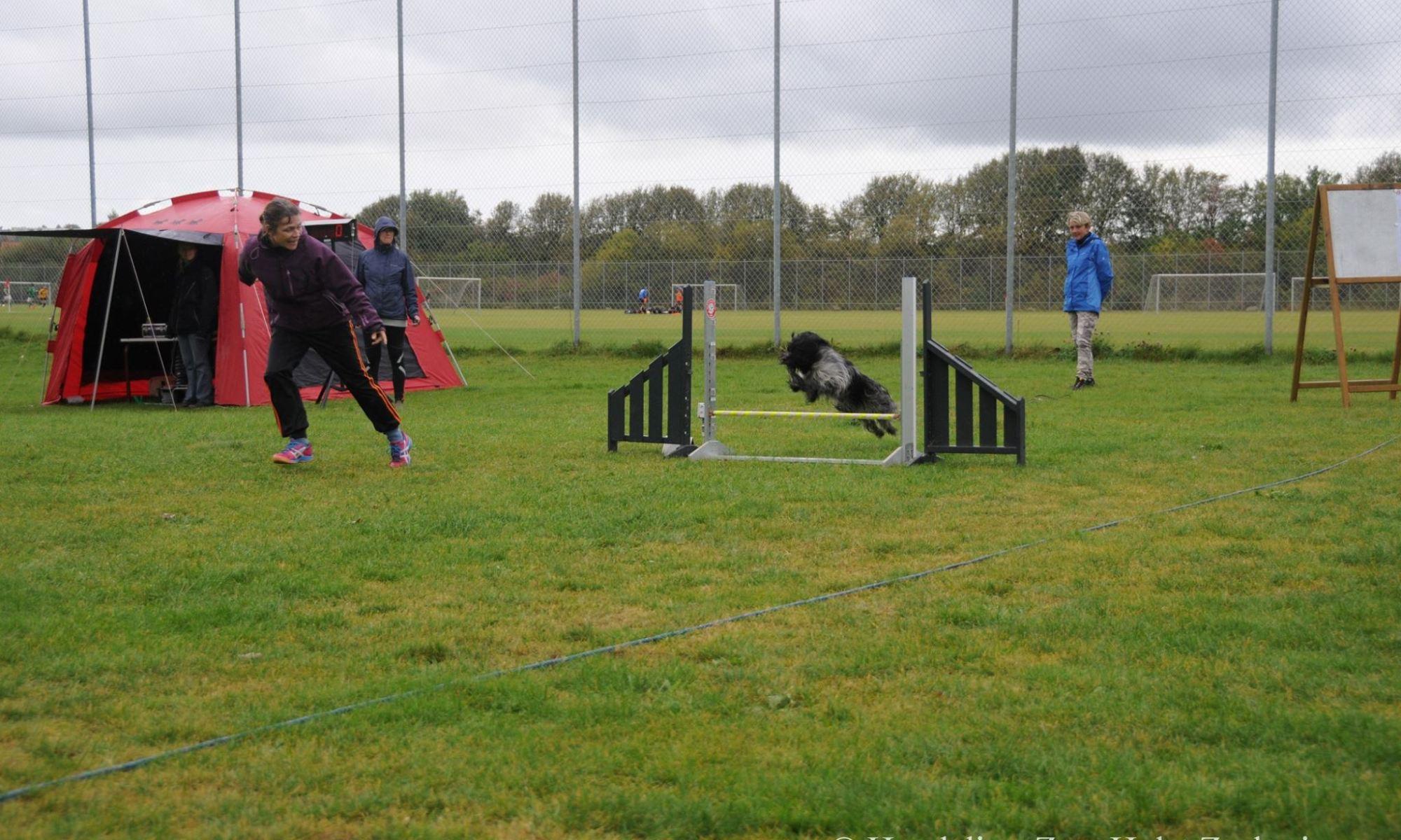 Schapendoes agility