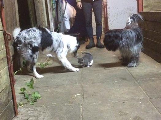 Viggo, Hottie og Mayo