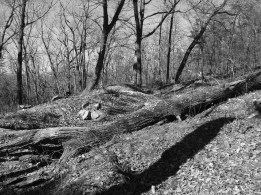 Remnants of Confederate works on Pigeon Hill