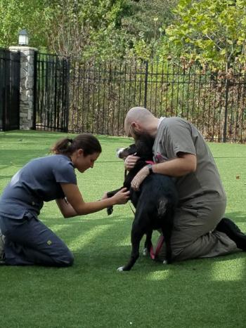 dr_taryn_mcdonald_veterinarian_pet_vaccines_laser-treatment_cancer_care_pain_management_kennesaw_marietta_georgia