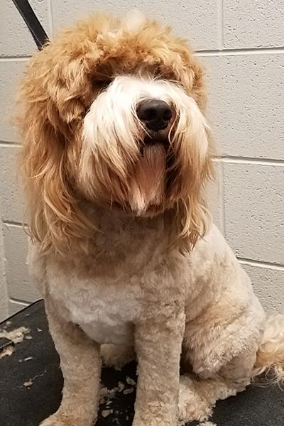 dog_cat_grooming_kennesaw_marietta_georgia