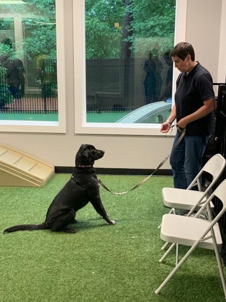 puppy_dog_training_kennesaw_marietta_georgia