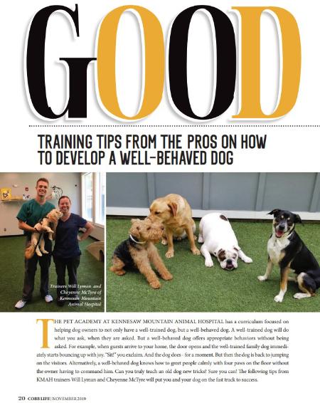 Dog-Training-Tips-Marietta