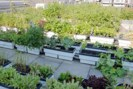 UrbanGardening2
