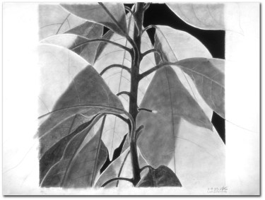 Avocado Plant (jury duty)