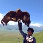 Imani_Eagle.jpg