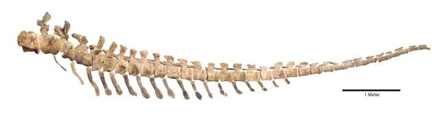 Dread Tail - Composite image