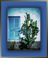 Cactus & Shutter (1 of 1)-2 art blog