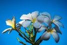 Flowers (1 of 1)-8 blog