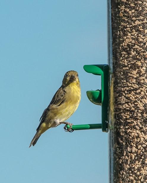 Bird Feeder (1 of 1)-2 blog