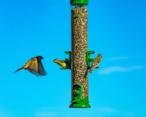 Bird Feeder (1 of 1)-7 blog