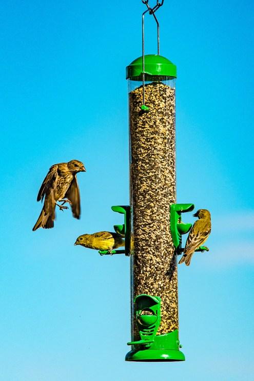 Bird Feeder (1 of 1) blog