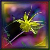 Sunset #90                     Marshall Gulch #3