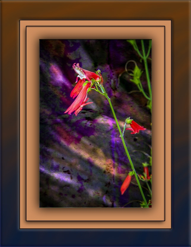 Bearded penstemon (1 of 1) art blog