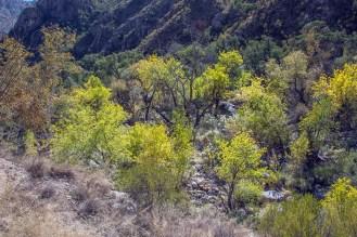 Fall Colors in Sabino Basin