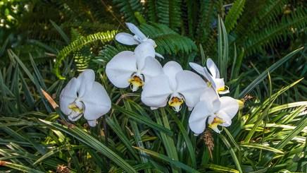 Balboa Park Flowers-2780 blog