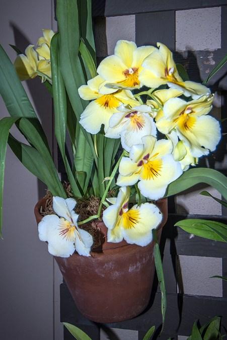 Balboa Park Flowers-2786 blog